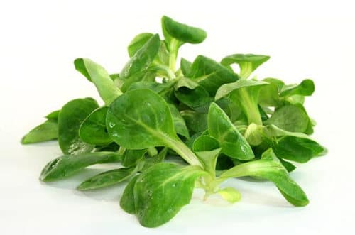 feuilles de mâche et vinaigrette balsamique