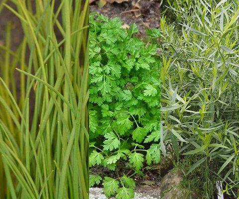 réussir sauce fines herbes