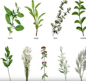 réussir une sauce : les plantes aromatiques